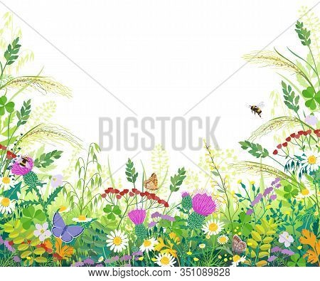 Horizontal Border With Summer Meadow Plants. Green Grass, Colorful Flowers, Butterflies And Bumblebe