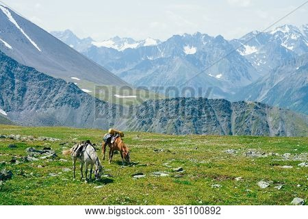 Two Beautiful Horses Is Grazing On Green Alpine Meadow Among Big Snowy Mountains. Wonderful Scenic L
