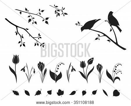 Spring Nature Design Element Set. Crocus, Snowdrop, Tulip And Lily Of The Valley Flowers. Tree Leave