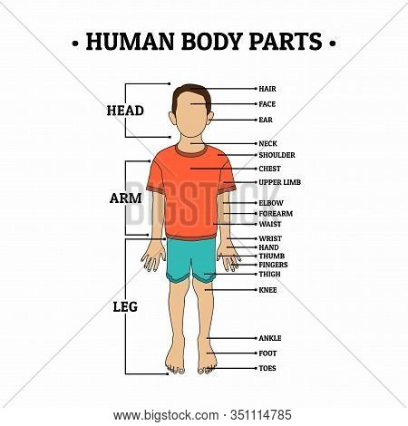 Human Body Parts Including Head, Arm, Leg, Hair, Face, Ear, Neck, Shoulder, Chest, Upper Limb, Elbow
