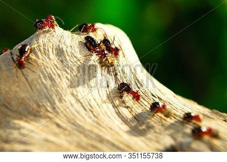 Termites Degrade Plants Or Wood. Termites Are Detritivores, Consuming Dead Plants At Any Level Of De