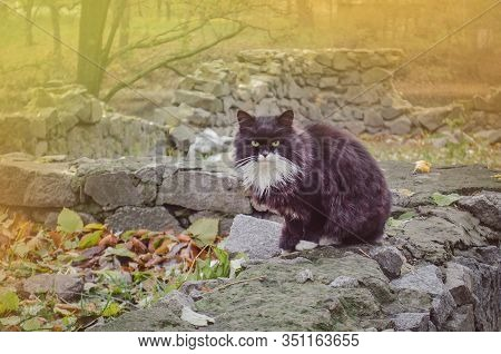 Black And White Street Homeless Cat. Homeless Stray Cat On The Rustic Street