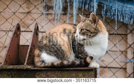 Street Homeless Cat. Homeless Stray Cat On The Rustic Street