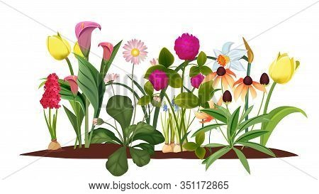 Spring Flower Bed. Garden, Blossom Flowers. Isolated Tulips And Lily Vector Illustration. Blossom Sp
