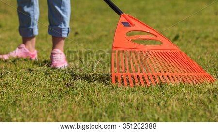Raking Leaves Using Rake. Person Taking Care Of Garden House Yard Grass. Agricultural, Gardening Equ