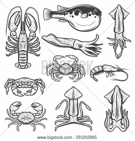 Seafood And Fish Sketches Of Lobster, Crabs And Shrimp, Squids, Cuttlefish, Fugu And Prawn. Vector S
