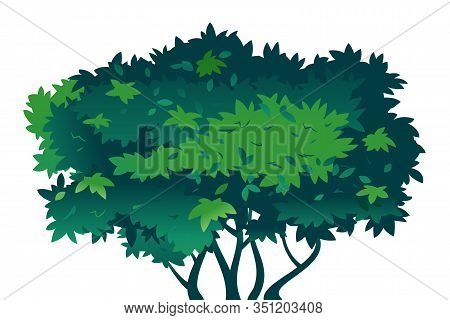 One Big Green Bush On Ground With Thick Leaves, Nature Plant For Composition, Plant With A Dense Cro