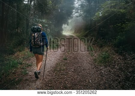 Way Of Saint James In Nothern Spain. Pilgrim Backpacker Female Going By The Path Through Eucalyptus
