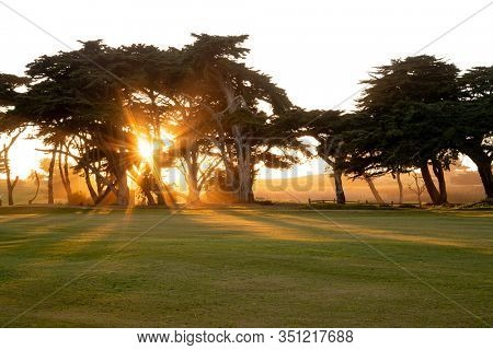 golf course with sunlight through tree
