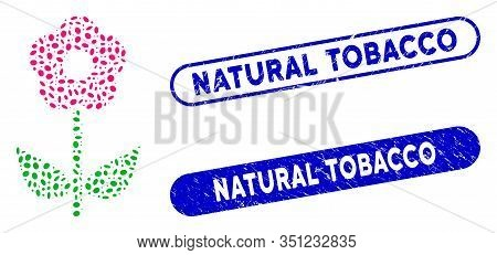 Mosaic Flower Plant And Grunge Stamp Seals With Natural Tobacco Phrase. Mosaic Vector Flower Plant I