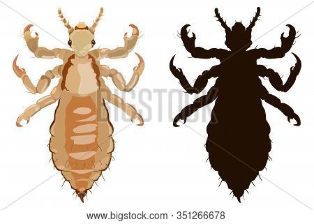 Louse Colored And Black Silhouette In Flat Style. Vector Illustration