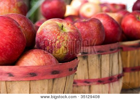 red autumn apples