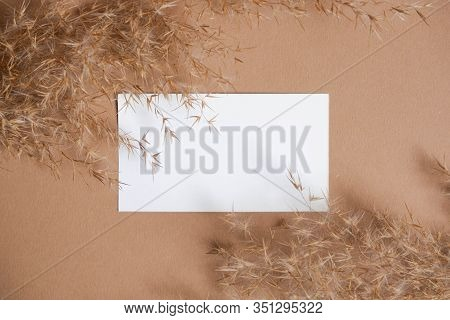 Business card template on beige background with reeds. Flatlay view. Corporate card. Reeds branch.