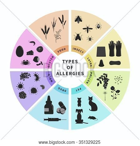 Types Of Allergies Infographics Design Vector Illustration. Animal Hair, Latex, Drugs, Insect, Food,