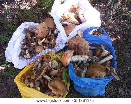 Mushrooms Forest Nature Soul Hobby Grass Basket Carp Fishing Grass Landing Love River Sea Soul