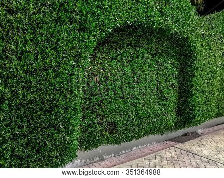 Boxwood Hedge Growing In The Shape Of A Fence. Beautiful Decoratively Trimmed Shrub, Background With