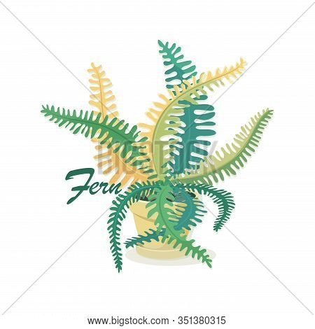 Fern Leaves. Vector Isolated Fern Flower On A White Background. Decorative Indoor Plant In A Pot. Ex