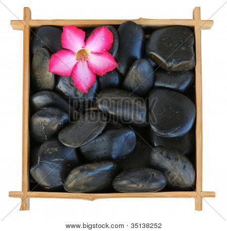 Flower On Rocks In A Frame