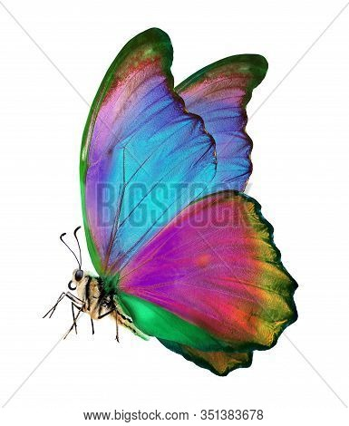 Bright Colorful Morpho Butterfly Isolated On White. Bright Colorful Butterfly In Flight. Beautiful M