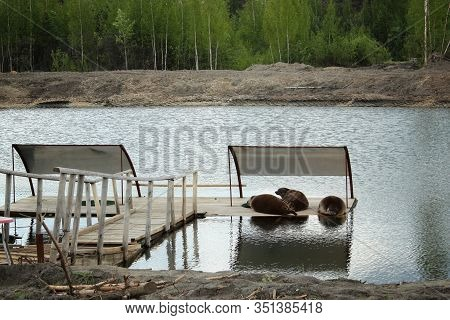 Young Cute Sea Lions Lying On A Wooden Platform. Sea Lions Sleeping On A Wooden Palette In Water.