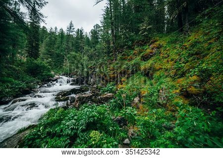 Atmospheric Green Forest Landscape With Mountain Creek In Rocky Valley. Beautiful Mystery Taiga With
