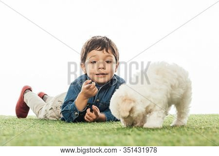 Smiling Boy Pointing White Finger And Havanese Puppy Smelling Grass Isolated On White
