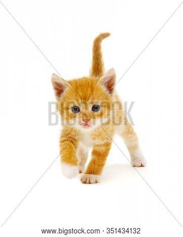 Ginger cat sitting on white background