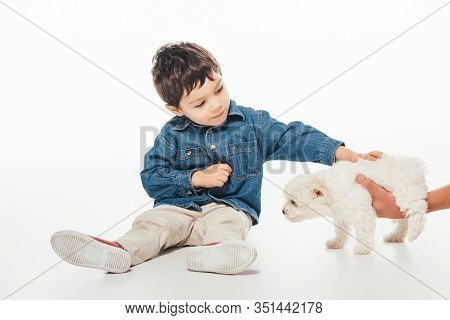 Cropped View Of Woman Holding Havanese Puppy And Boy Stroking On White Background