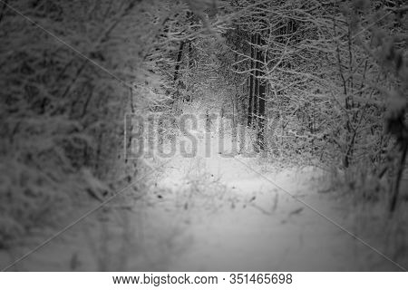 Beautiful Winter Forest And The Road.poland