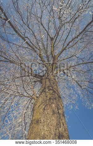 Frozen Tree On Winter Field And Blue Sky.europe