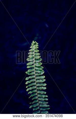 Fern Branch On A Dark Background. Dark Blue Background. Fern Plant Leaf Background. Royal Blue Fern