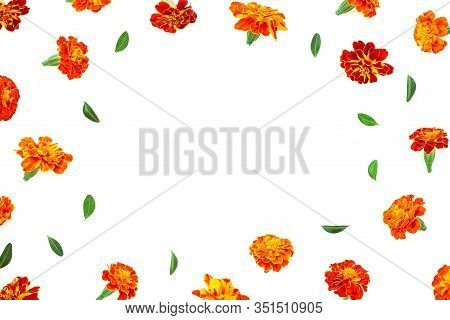 Marigold Flower Isolated On White Background. Marigold Pattern. Floral Pattern. Yellow Flower