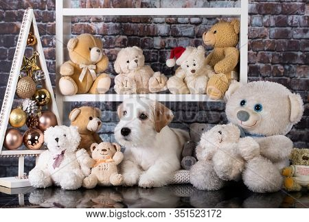 Jack Russell Terrier puppy sitting on a shelf among teddy bears
