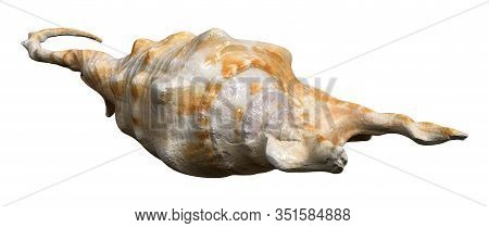 3D Rendering Sea Shell On White