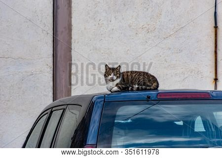 A Brazen Careless Relaxed Stray Cat Sitting / Lying On Top Of A Blue Car