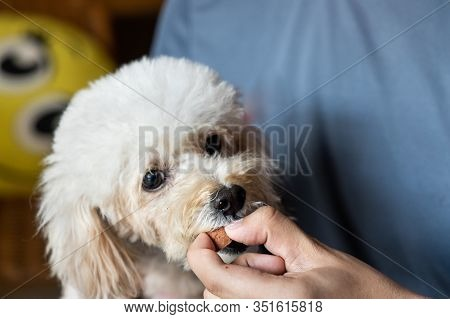 Series Of Person Feeding Pet Dog With Preventive Heartworms Chewable