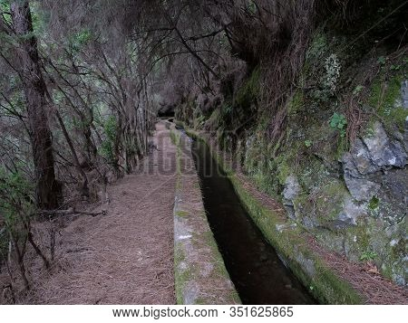 Path Along Levada, Water Duct At Mysterious Laurel Forest Laurisilva, Lush Subtropical Rainforest At