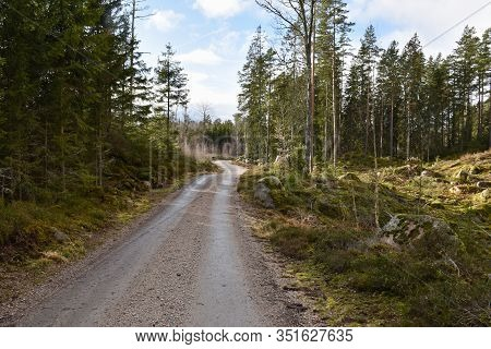 Bright And Winding Gravel Road In A Landscape With Coniferuous Trees