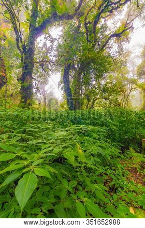 Doi Inthanon Nature Park, Thailand. Tropical Rainforest With Fresh Green Trees And Plants. Shortly A