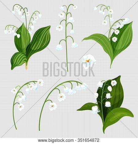 Set Of Isolated Lily Of The Valley Bouquet Elements. Realistic Convallaria Majalis Plant With White