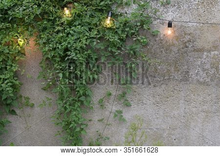 Trendy Globe String Lights Outdoor Hanging From Trees In Private Garden With Fence And Greenery In T