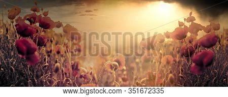 Poppy Field, Flowering Wild Poppy Flowers At Sunset, Soft And Selective Focus On Poppy Flower, Beaut