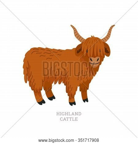 Rare Animals Collection. Highland Cattle. Scottish Breed Of Long-haired Cattle. Flat Style Vector Il