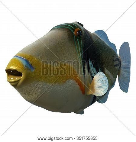 3D Rendering Picasso Triggerfish On White