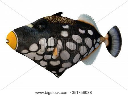 3D Rendering Clown Triggerfish On White