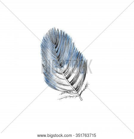 Blue Plume Isolated On White. Soft And Downy Feather Of Bird. Single Element For Packaging, Label, L