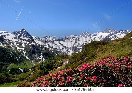 Deep Blue Sky, Snow-capped Mountains And Alpine Roses In The Foreground Deep Blue Sky, Snow-capped M