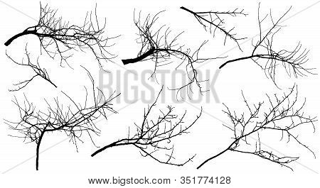 Bare Branches Different Trees (apple Tree, Chestnut, Cherry Tree, Poplar And Etc.), Set. Vector Illu
