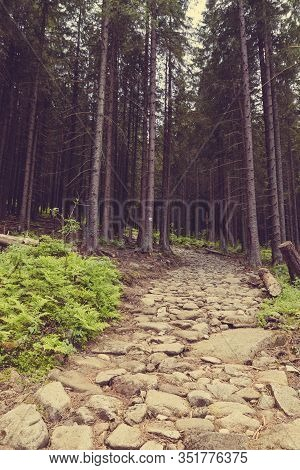 Pine Forest And A Path. Pine Forest With A Path. Forest Path, Scenic Nature Landscape.
