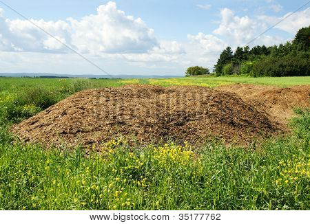 Agriculture concept: Chicken dung hill or manure heap dumped in the field ready to be spread out great compost plant fertilizer. poster